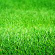 Green Grass Texture - Foto Stock