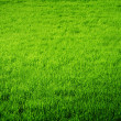 Perfect Fresh Grass - Stock Photo