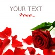 Red Rose & Petals Border — Stock Photo