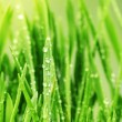 Fresh Grass with Waterdrops — Stock Photo #10679262