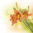 Lily Flowers Border Design. Summer Flowers — Stock Photo #10679857