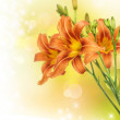 Lily Flower — Stock Photo #10679863
