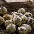 Quail eggs in the nest - 图库照片