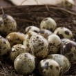 Quail eggs in the nest - Foto Stock