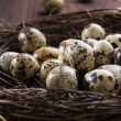 Quail eggs in the nest - Stockfoto