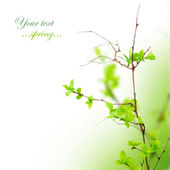Beautiful Spring Leaves — Stock Photo