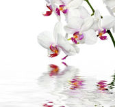 Beautiful Orchids In Water — Stock Photo