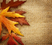 Autumn Leaves border over Burlap background — Stock Photo