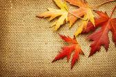 Autumn Leaves over Burlap background — Stock Photo