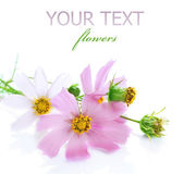 Beautiful Flowers over white — Stock Photo