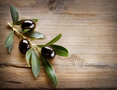 Fundo verde-oliva — Foto Stock