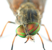 Very Detailed Macro Portrait Of Fly — Stock Photo