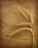 Wheat Ears Over Burlap Background — Stock Photo