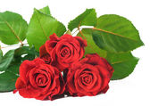 Red Roses Bunch — Stock Photo