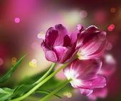 Flowers Design — Stock Photo