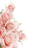 Beautiful Roses Border — Stock Photo