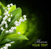 Lily-of-the-valley Flowers Design — Stock Photo