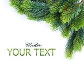 Christmas tree branches border over white — Stock Photo
