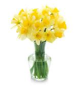 Beautiful Daffodils In A Vase — Stock Photo