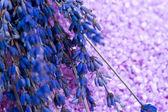 Lavender Spa treatment — Stock Photo