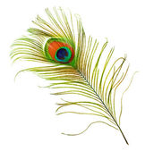 Peacock Feather Over White — Stock Photo