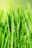 Fresh Grass with Waterdrops — Stock Photo