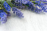 Lavender flowers over white — Stock Photo