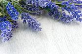Lavender flowers over white — Stock Photo