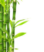 Bamboo Isolated On White — Stock Photo