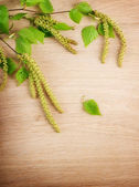 Spring Birch Over Wooden Background — Stock Photo
