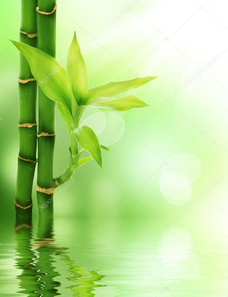 Bamboo — Stock Photo #10676409