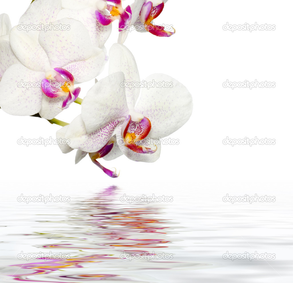 Beautiful Orchids WIth Reflection — Stock Photo #10676615