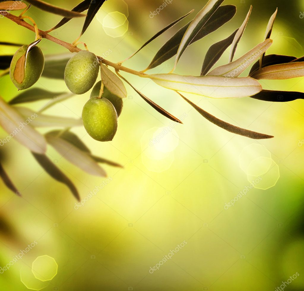 Olives  Stock Photo #10676993