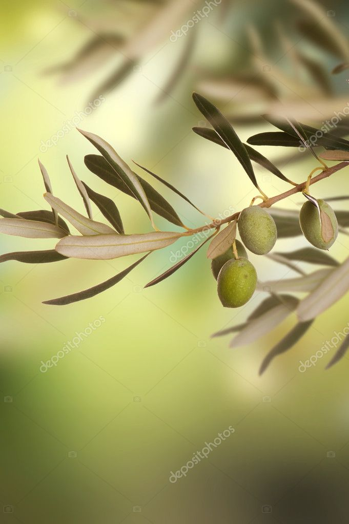Olives  Stock fotografie #10676995