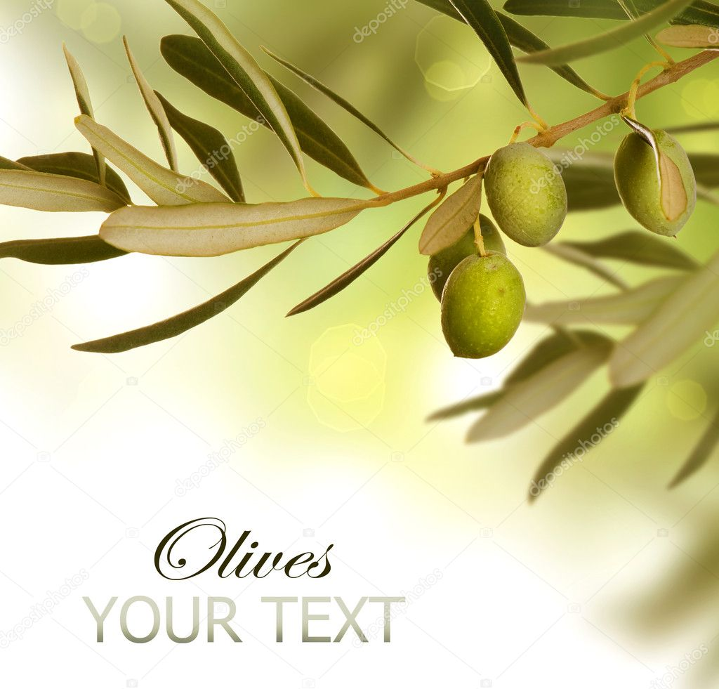 Olive Branch border design. Growing Olives — Stock Photo #10676997