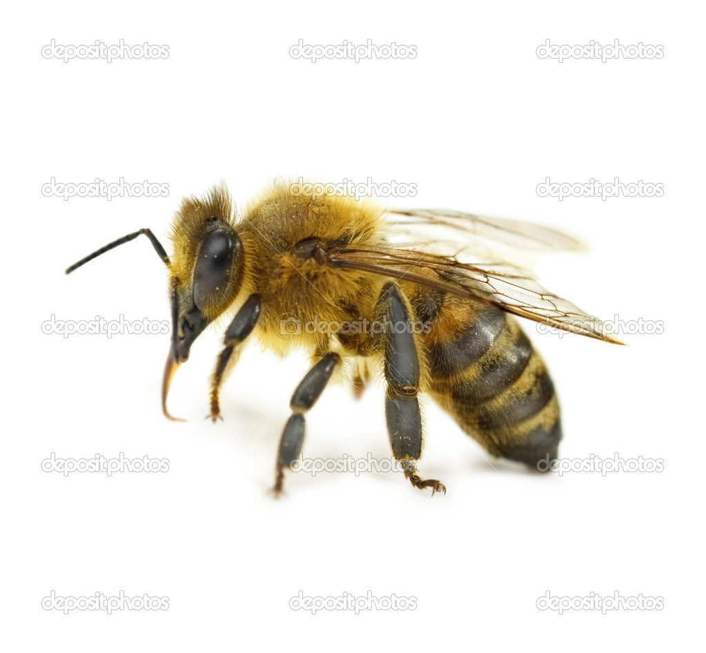 bee divorced singles personals Is it a sin to marry a divorced person - christian dating advice for singles from he said - she said real life dating scenario questions.