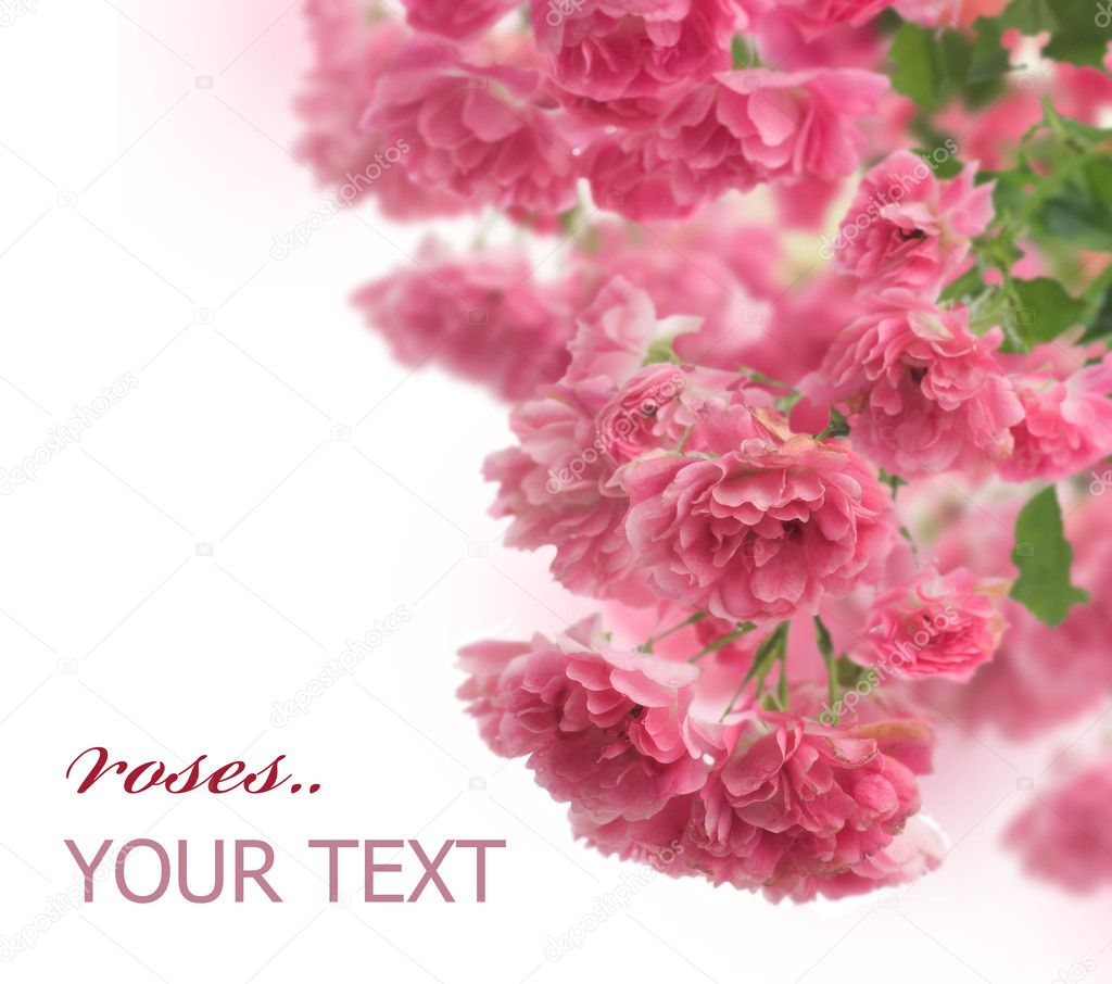 Beautiful Roses Border — Stock Photo #10677484