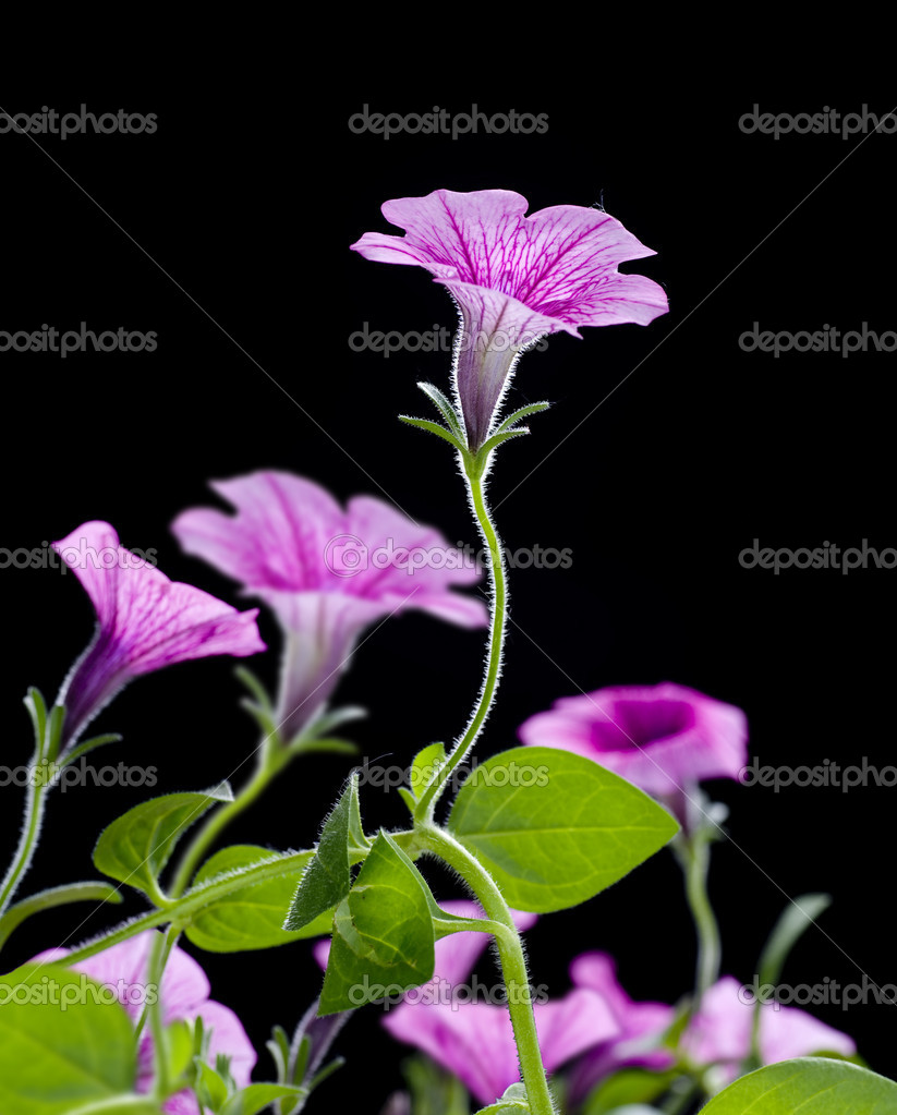 Bell Flowers — Stock Photo #10678438