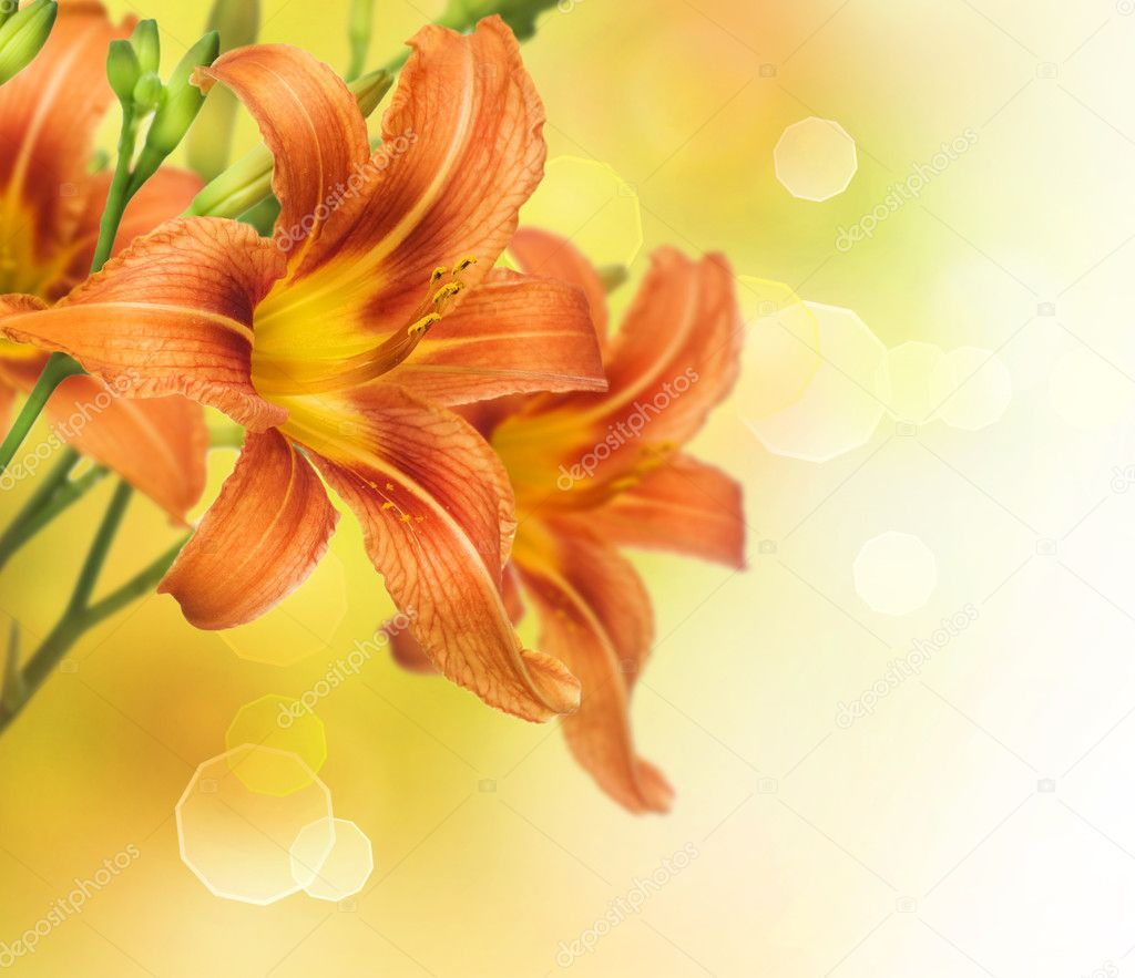Yellow Lily Flower Border Design — Stock Photo #10679860