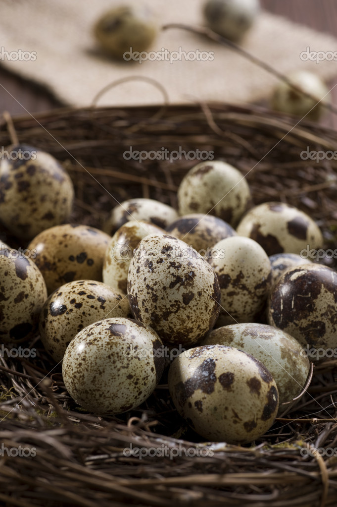 Quail eggs in the nest — Stock Photo #10679882