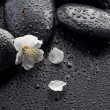 Wet Zen Spa Stones And Spring Flower — Stock Photo