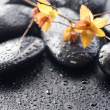 Wet Zen Spa Stones — Stock Photo