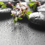 molhado zen spa pedras e flor de primavera — Foto Stock #10680053