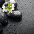 Wet Zen Spa Stones With Spring Blossom. Selective Focus — Stock Photo
