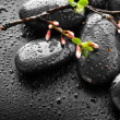Wet Zen Spa Stones And Spring Blossom — Stock Photo