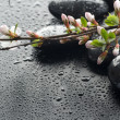 Wet Zen Spa Stones And Sakura Blossom — Stock Photo #10680068