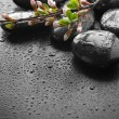 Stock Photo: Wet Zen SpStones And Spring Blossom