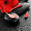Wet Spa Stones And Red Flower — Stock Photo