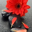 Zen Spa Wet Stones And Red Flower - Stockfoto