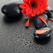 Zen Spa Wet Stones And Red Flower - ストック写真
